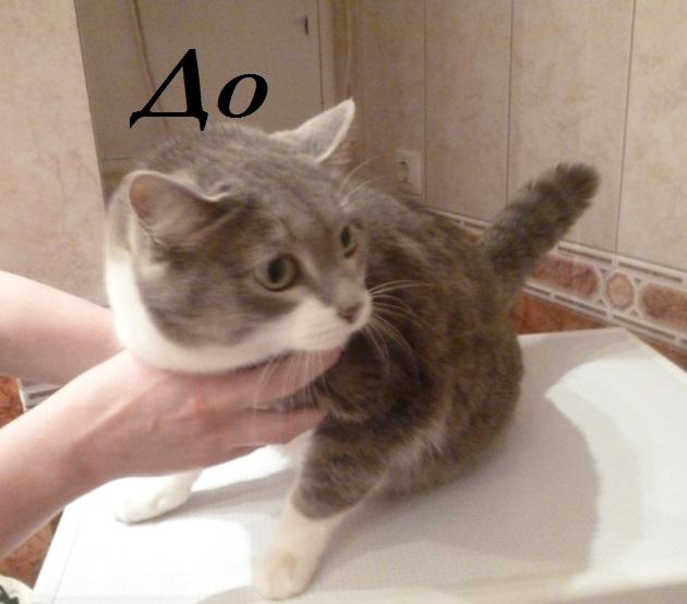 Подстричь кота красноярск