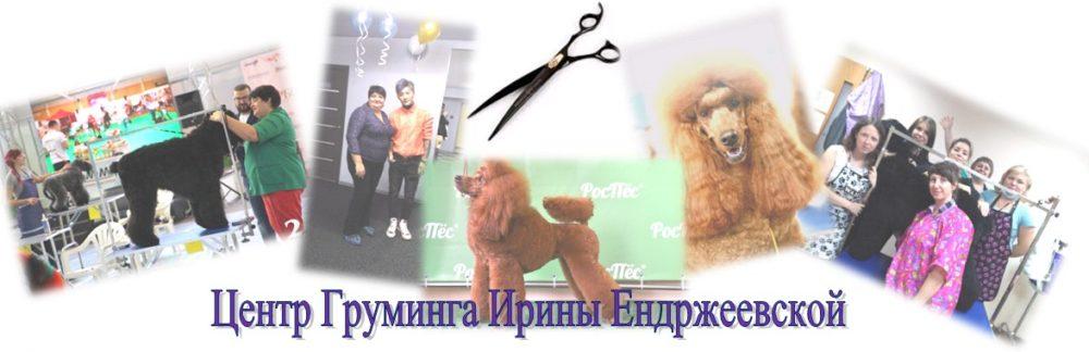 Стрижка собак кошек Красноярск.